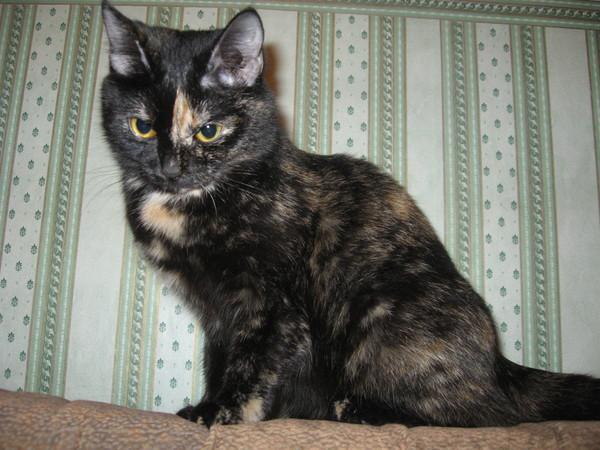 у кошки запор что делать в домашних условиях народными средствами